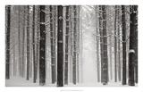 A Snowy Walk V