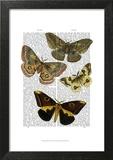 Moth Plate 3