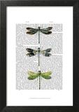 Dragonflies Print 2