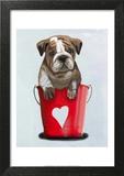 Bulldog Bucket Of Love Red