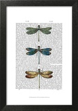 Dragonflies Print 1