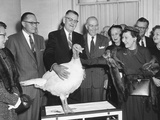 First Lady Mamie Eisenhower Receiving a Live Thanksgiving Turkey