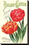 Ferry Bulbs & Seeds Detroit MI