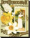 Henderson Seeds New York