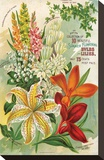 Summer Flowering Bulbs &Lilies