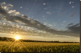 Sunset Over the Golden Meadow