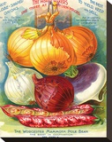 True Globe Shaped Onions