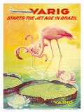 Brazil -Pink Flamingos wade in a Lily Pond - Variq Airlines