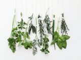 Various Fresh Herbs Hanging Up