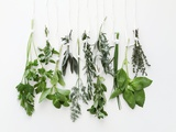 Various Fresh Herbs Hanging Up Reproduction d'art par Tanya Zouev