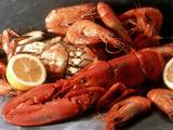 Lobster  Shrimp and Crab