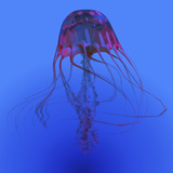 Red Jellyfish Illustration