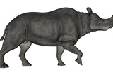 Brontotherium Isolated on White Background