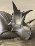 Xenoceratops Foremostensis Relaxing in a Mud Puddle