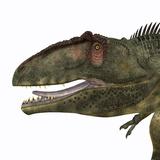 Giganotosaurus Dinosaur Head