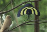 A Male Xiaotingia Zhengi Bird Tries to Surprise a Female