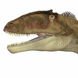 Carcharodontosaurus Dinosaur Head