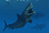 A Giant Megalodon Shark During the Cenozoic Era of Time