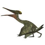 Pterodactylus Flying Reptile