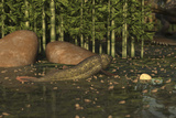 A Ceratodus Lungfish from the Early Cretaceous