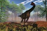 Brachiosaurus Dinosaur Amongst an Araucaria Forest