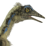 Archaeopteryx Is a Carnivorous Bird That Lived During the Jurassic Period