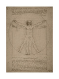 Leonardo Da Vinci's Vitruvian Man  Circa 1490
