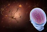Conceptual Image of Human Brain with Neurons