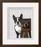 Boston Terrier Photographer