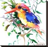 Oriental Kingfisher