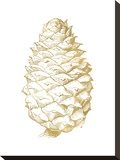 Pine Cone Golden White