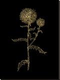 Thistle 2 Golden Black