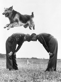 German Shepherd Jumping during Military Training