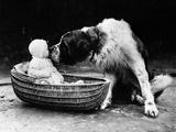 Cute Dog Licking Baby Girl (6-11 Moths) Sitting in Basket