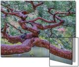 Kyoto Japan Acrylique par Art Wolfe