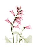 Pink Foxglove Portrait
