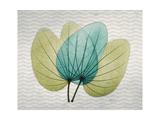 SoHo Orchid 3