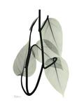 Pot Hos Leaf Portrait