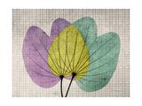 SoHo Orchid 1