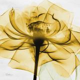 Golden Rose Close-Up Reproduction d'art par Albert Koetsier