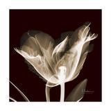 Parrot Tulips 2