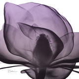 Magnolia Wine Beauty
