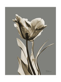 Tonal Tulip on Gray