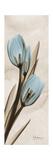 Tulip Moments