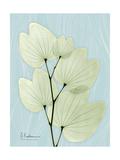 Orchid Tree L122