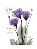 Purple Gentian Hope Giclée premium par Albert Koetsier