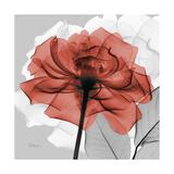 Rose on Gray 1 Reproduction d'art par Albert Koetsier
