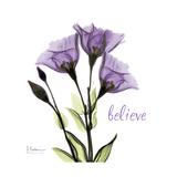 Believe Gentian