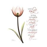 Sustain Life Tulip
