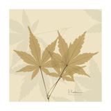 Japanese Maple Moments 1